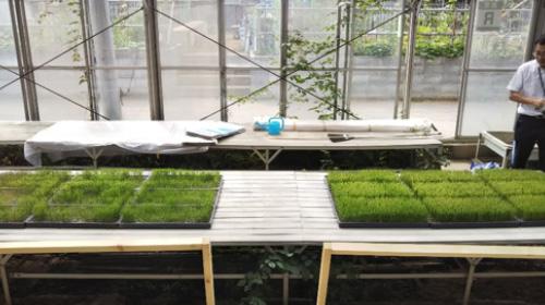 東京農業大学研究画像